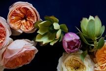 Flowers / by Ann Forstie