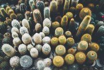 Killer Cacti
