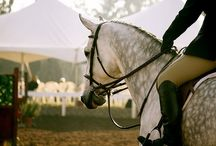 Horse love❤❤ / For my serious number one passion... Horses. And in my case, English riding. / by Madison Sackewitz