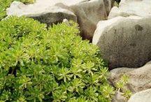 Art - Plants