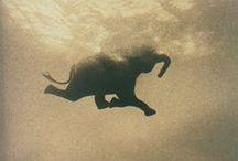 Art - Elephants & Horses