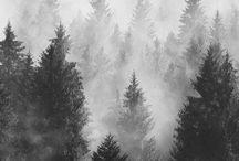 lit | the trees speak latin / the raven cycle
