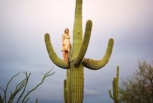 Cactus&succulent