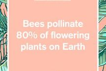 Bee Fun Facts / HoneyBum has partnered with Planet Bee Foundation! For every purchase, HoneyBum and Planet Bee Foundation will plant 10 flowers per piece purchased!