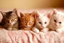 All God's Critters - Kitties 4 / by Kay Hough
