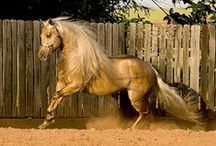 All God's Critters - Horses / by Kay Hough