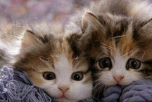 All God's Critters - Cute Kittens 2 / by Kay Hough