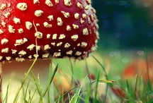 Much Ado About Mushrooms / I think mushrooms are one of Nature's most interesting creations.