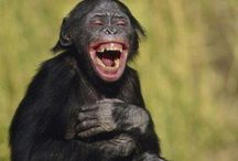 I like it when u laugh / What a great way to be! / by David Greenwood