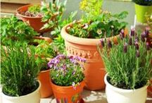Gardening & Outdoors / Tips and Inspiration for Gardens, Outdoor Spaces, and Enjoying Nature
