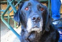 Inspiring Canine Companions