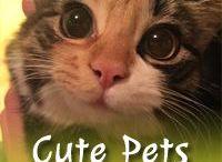 Cute Pets / Cute Pets