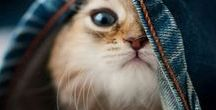 Котенок / Кто не подписан на котят ну они такие няшки.
