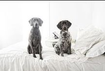 Pets / by Laura Reid