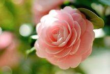 So pretty... / by Meghan Frances