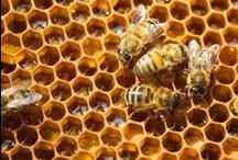 The Bee's Knees / I LOVE bees and I want to be a bee farmer or whatever you call them.