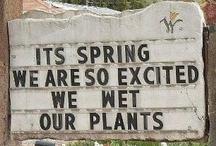 for my garden / by Nancy Toomey