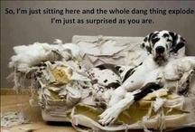 Funny...:-)