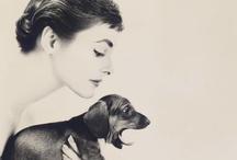 Weiner dog love. / Oodles of cuteness.  / by Savannah Barefield