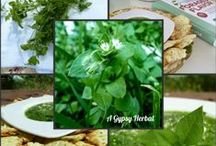 Herbs in My Backyard: chickweed