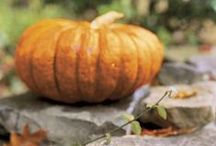 Autumn-October / fall harvest, leaves, pumpkins / by Tiffany Gaskin