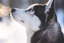 Doggos >~<