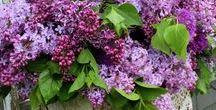 Il giardino ...segreto / Piante,fiori e giardini da fare o da copiare