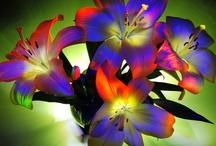flower varieties / by Laura Patino