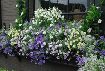 Container Gardening / Inspiration for my window boxes and flower pots.... / by Laurie Windley