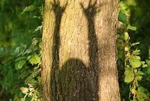 """Hug a Tree / """"And forget not that the earth delights to feel your bare feet and the winds long to play with your hair"""" ~Khalil Gibran  / by Meaghan Coogan"""