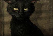 cats n stuff