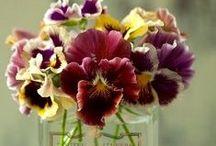Květiny do domu / Nápady na výzdobu domu, posezení, stolu, terasy a vůbec okolí domu květinami, rostlinami, dekoracemi z přírodnin