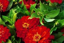 Colour Capsule: Red Flowers