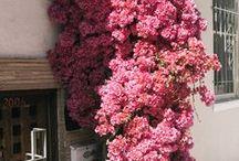 Colour Capsule: Pink