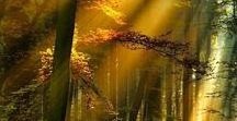 Mysterious forest-Tajemniczy las