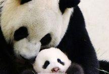 Cute Irresistable Animals