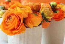orange crush / by Chrissy Senger