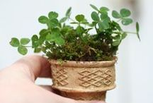 gardening ideas / A collection of gardening tips and tricks.  / by Julie @ Knitted Bliss