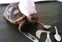 For the turtle fan in me