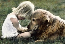 I Want a Golden!! / by Lark Rayburn