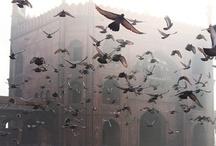 VOLAR SIN FRONTERAS / Para nosotros volar no sólo es llevarte a tu destino, sino también todo lo que implica echar a volar tus sueños, tu mente y tus pensamientos. Acompáñanos a volar juntos.