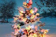 WinterWonderland / by Bailey Leftwich