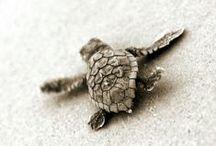 Sea turtle <3 / I love them in jewelry shape!