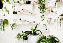 Home - Indoor Garden / How to make your home more green, which plants are the best indoor plants, can survive with no sunlight. How to make your home into an indoor garden. Plants are apartment therapy.