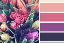 Palettes by Design Seeds