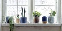 Plants: Indoors