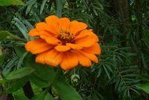 Moje foto - květiny a příroda / květiny a příroda
