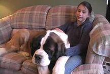Man's Best Friend / St. Bernards & other dogs...