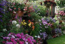 Garden / by Hiromi Matsuda