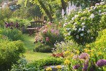 Garden dreams / Puutarha, luonto, kukka, piha